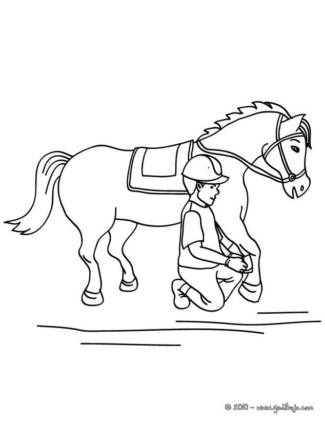 ausmalbilder pferde putzen  28 images  ausmalbilder