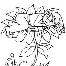 Dibujo para colorear : elfo durmiendo sobre una flor