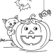 Dibujo para colorear : calabaza con araña y gato negro  halloween