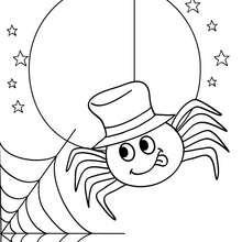 Dibujo para colorear : una araña y su telaraña para coloraer halloween