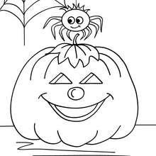 Dibujo para colorear : una araña con su telaraña