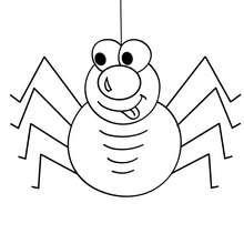 Dibujo para colorear : una araña con 8 patas