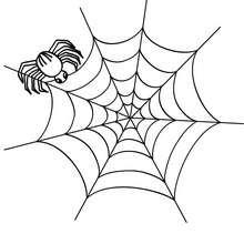 Dibujo para colorear : araña fabricando su telaraña para halloween