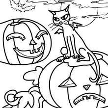 Dibujo para colorear : un gato negro en un campo de calabazas