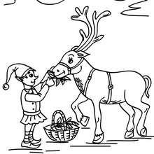 Dibujo para colorear un reno navideño con un duende - Dibujos para Colorear y Pintar - Dibujos para colorear FIESTAS - Dibujos para colorear de NAVIDAD - Dibujos ELFOS DE NAVIDAD para colorear