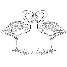 Dibujo para colorear : Corazones y flamingos