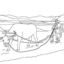 Dibujo para colorear un agricultor cultivando en el campo - Dibujos para Colorear y Pintar - Dibujos para colorear PROFESIONES Y OFICIOS - Dibujos de AGRICULTOR para colorear