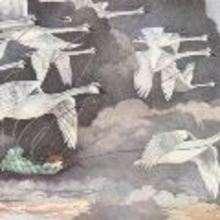 Los cisnes salvajes