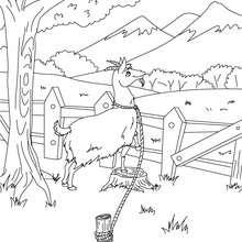 Dibujo de la Cabra del Señor Seguin para colorear - Dibujos para Colorear y Pintar - Dibujos de CUENTOS para colorear - Cuentos de Alphonse DAUDET para colorear