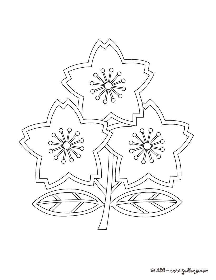 Dibujos de RUGBY para colorear - 49 Dibujos para COLOREAR los ...