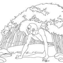 Dibujo del HÁBITAT DEL HOMO HABILIS - Dibujos para Colorear y Pintar - Dibujos para colorear HISTORIA - PREHISTORIA dibujos para colorear