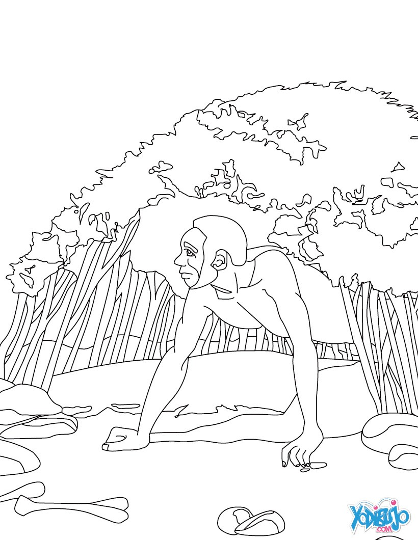 Dibujos Para Colorear Homo Erectus Eshellokidscom