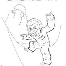 COPO DE NIEVE el gorila