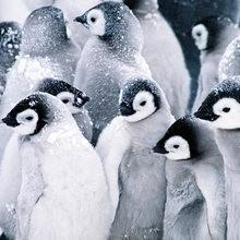 El pingüino RONCHI - Lecturas Infantiles - Cuentos infantiles - Cuentos de niños