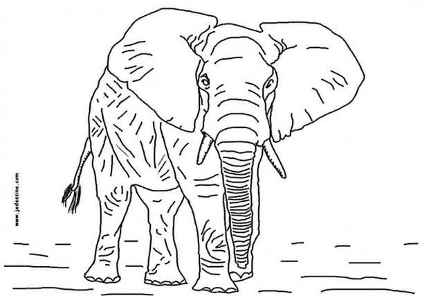Dibujos ANIMALES SALVAJES para colorear, el elefante para imprimir