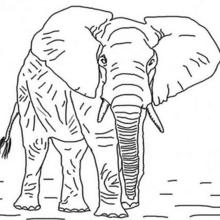 Dibujo el elefante