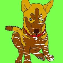 animales salvajes, Dibujos para colorear ANIMALES