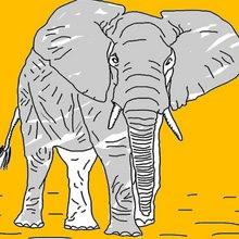 Dibujos ANIMALES SALVAJES para colorear