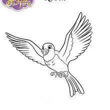 Dibujo para colorear : ROBIN la paloma