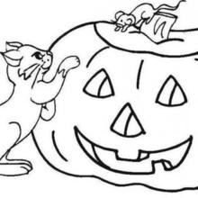 Dibujo para colorear : una calabaza con un ratón y un gato