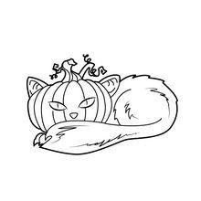 Dibujo para colorear : Gato calabaza