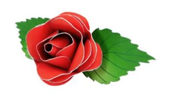 Botón de rosa roja