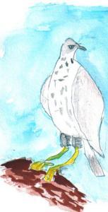 La águila