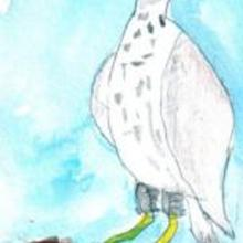 Ilustración : La águila
