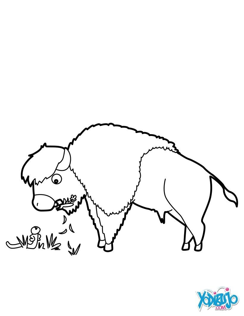 Dibujos para colorear bisonte que pasta - es.hellokids.com