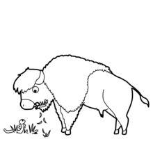 Dibujo para colorear : Bisonte que pasta