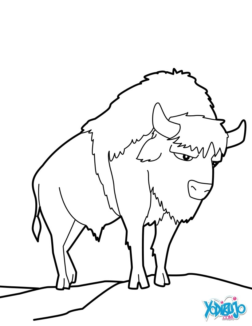 Dibujos para colorear bisonte salvaje - es.hellokids.com