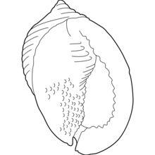 Dibujo para colorear : Shell desde abajo