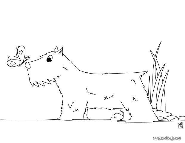 Dibujos para colorear cachorro bulldog francés - es.hellokids.com
