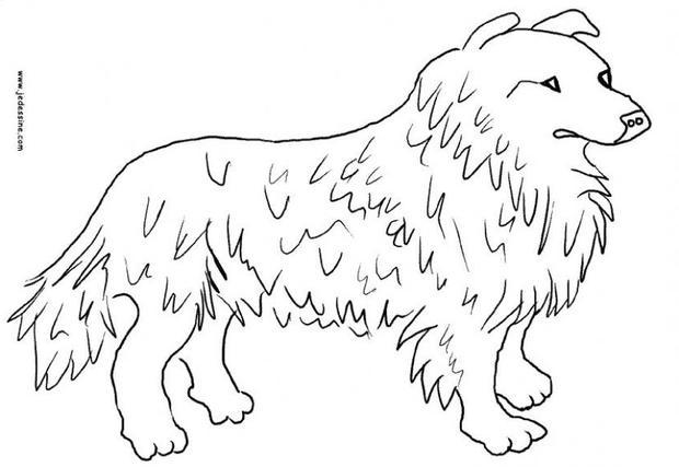 Colorear En Línea: Dibujos Para Colorear Un Perro Collie
