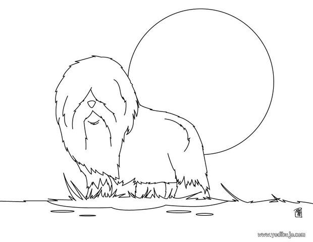 Dibujos para colorear un perro labrador - es.hellokids.com