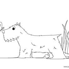 Dibujo para colorear : un perro Cocker