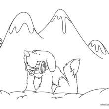 Dibujo para colorear : un perro San Bernardo