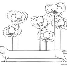 Dibujo para colorear : un perro Teckel