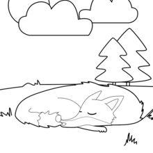 Zorro dormido