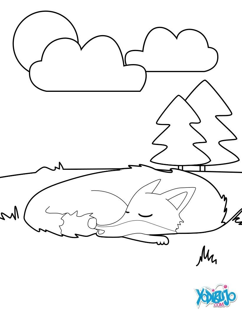 Dibujos para colorear zorro dormido - es.hellokids.com