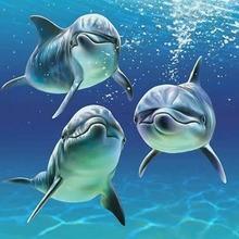 Reportaje para niños : Los Delfines: ¿Lo sabías?