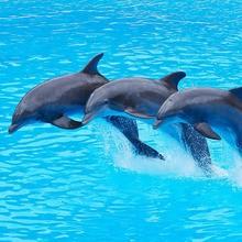 Reportaje para niños : Los delfines para niños