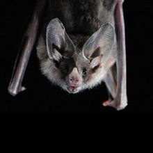 El Murciélago y la fiesta de Halloween