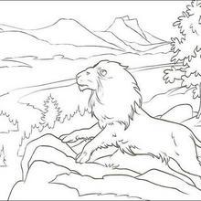 Dibujo para colorear : El león Aslán