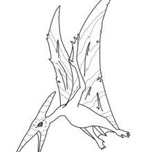 Dibujo para colorear : Pteranodón para imprimir