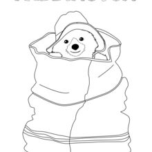 Dibujo para colorear : Paddington escondido en una bolsa