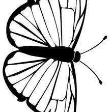 Una mariposa morada