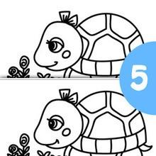 Juego de buscar las diferencias : TORTUGA busca las 5 diferencias