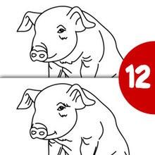 Cría de cerdo busca las diferencias