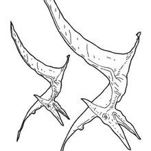 Dibujo para colorear : Pteranodón